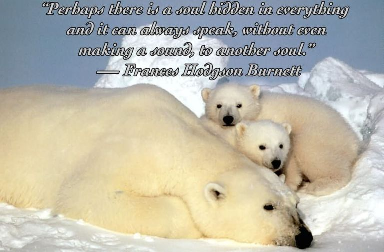 Animal Quotes Sayings 02