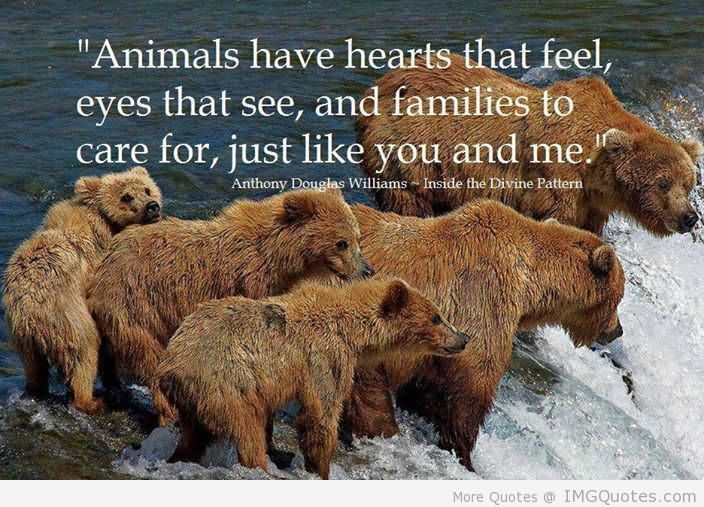 Animal Quotes006