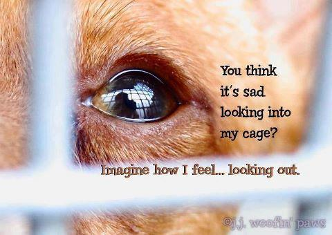 Animal Quotes You think it's sad looking into my cage imagine how i feel looking out