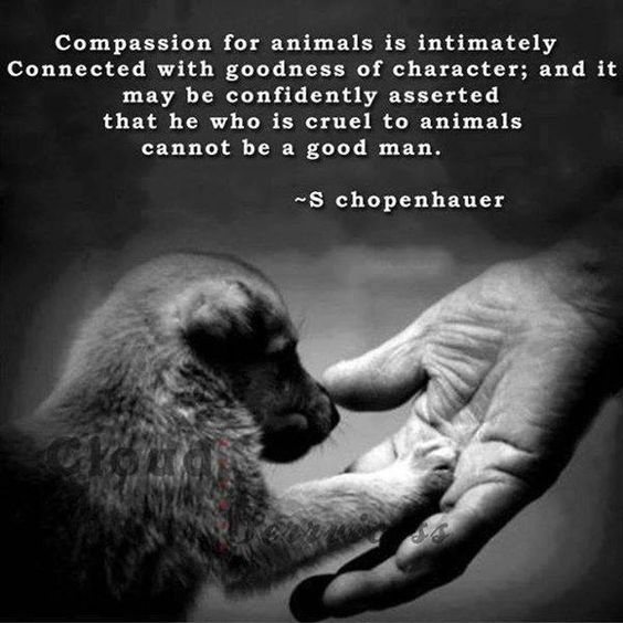 Animal Quotes032
