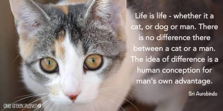 Animal Quotes017