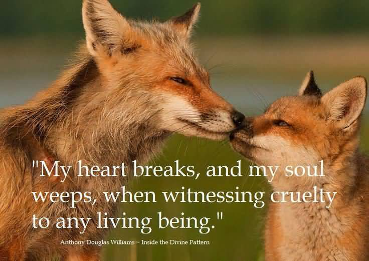 Animal Quotes039
