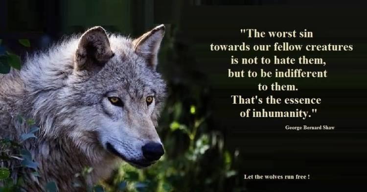Animal Quotes033
