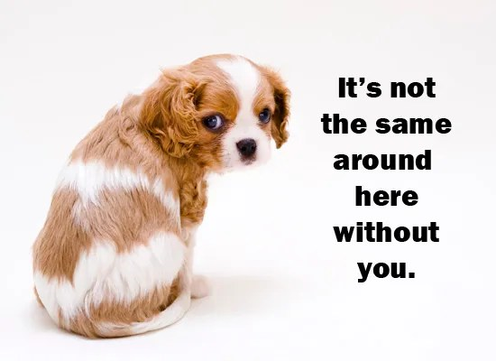Cute Puppy I Miss You Greeting Quotes Image