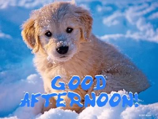 Cute Puppy Wishes Good Afternoon Picture