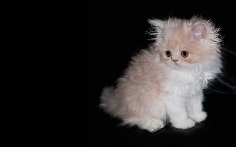 Cutest Kitten On A Nice Black Background Full HD Wallpaper