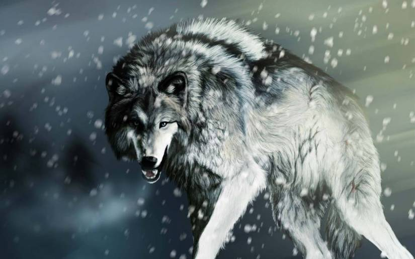 Fabulous Strong Wolf With Snow Drops Full HD Wallpaper