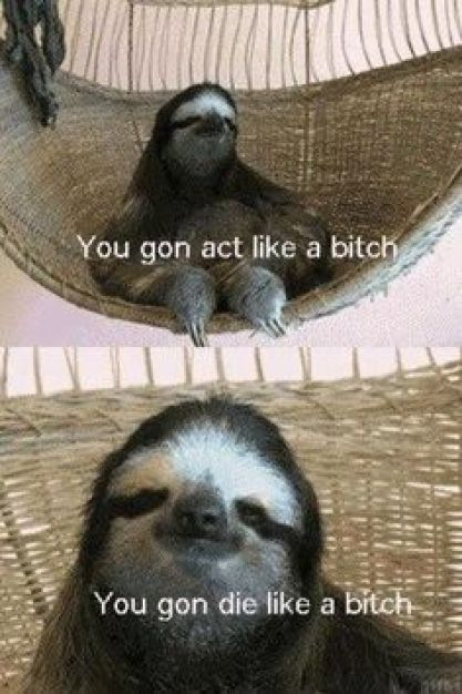 Funny Sloth Memes You gon act like a bitch you gon die like a bitch
