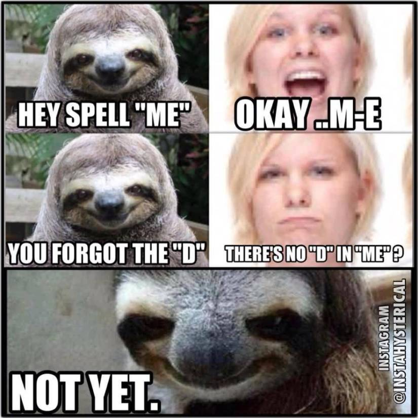 Funny Sloth Rape Meme Hey spell me okay.. M E you forget the D Pictures