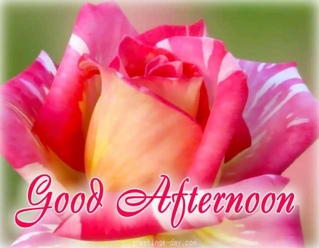 Good Afternoon Wishes Image