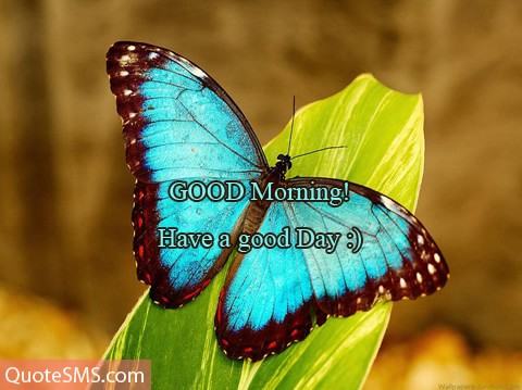 Good Morning Have A Good Day Wishes Image