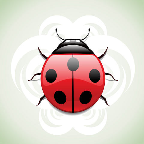 Horrible Black And Red Color Ink Lady Bug Tattoo Design For Boys