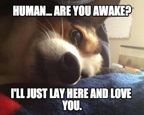 Funny Meme Love You : Funny love meme will definitely make you laugh picsmine