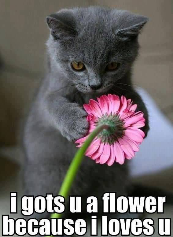 I guts u a flower because i loves u I Love You Memes Images