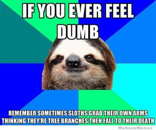 If you ever feel dumb remember sometimes sloths grab Funny Sloth Memes