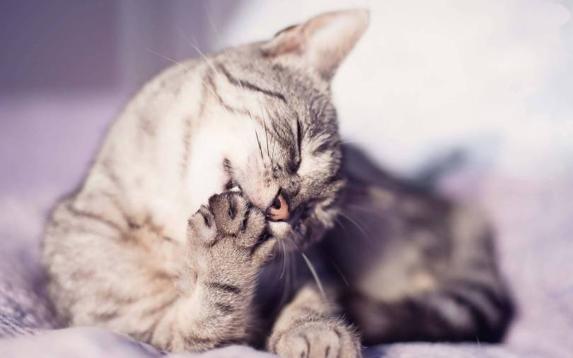 Incredible Cat Seems Lazy Full HD Wallpaper