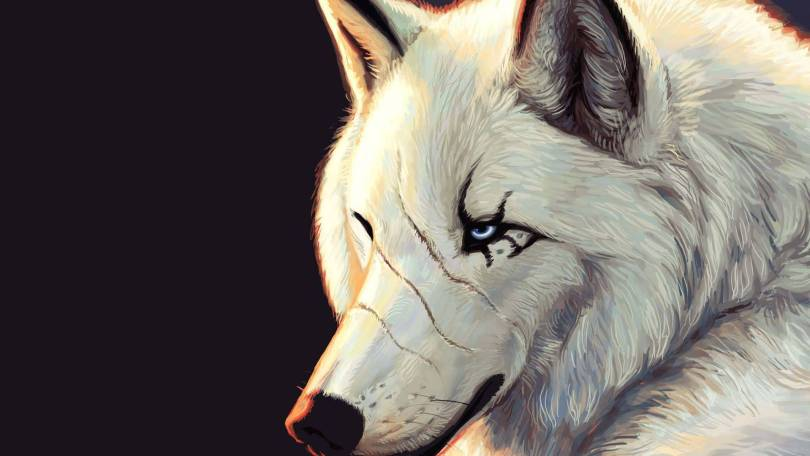 Most Cutest Scary White Wolf Wallpaper Full HD Wallpaper