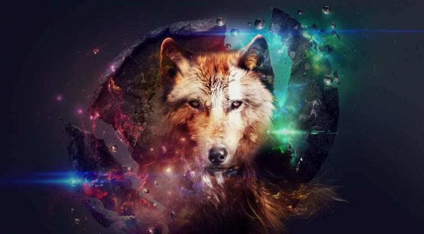 Most Fabulous Fantastic Design For Wild Animals Full HD Wallpaper