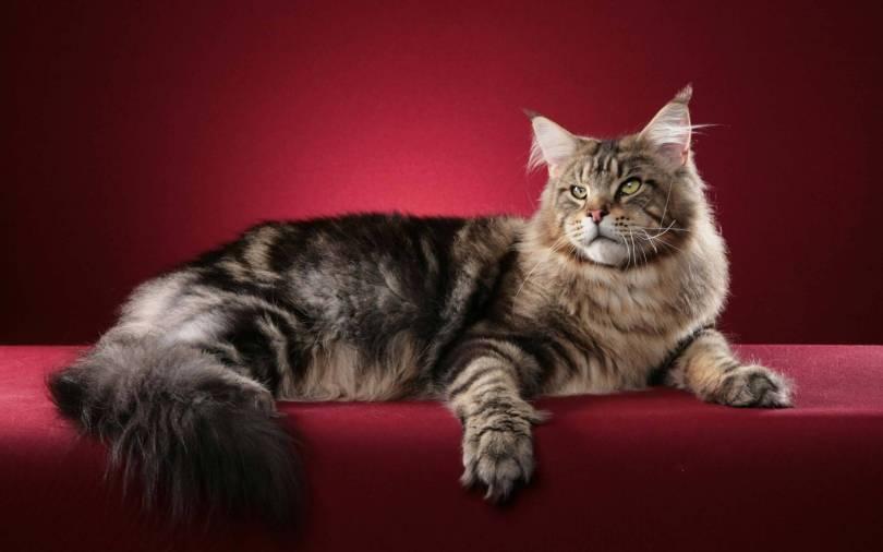 Most Wonderful Cat On The Red Sofa Full HD Wallpaper