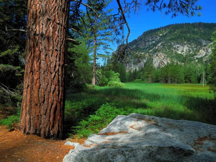 Most Wonderful Zumwalt Meadow Trail Sequoia and Kings Canyon National Parks California 4K Wallpaper