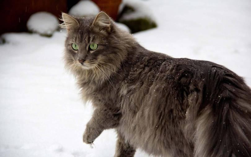 Very Nice Cat With Green Eyes 4K Kitten Wallpaper