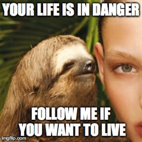Your life is in danger follow me if you want to live Funny Sloth Whisper Memes