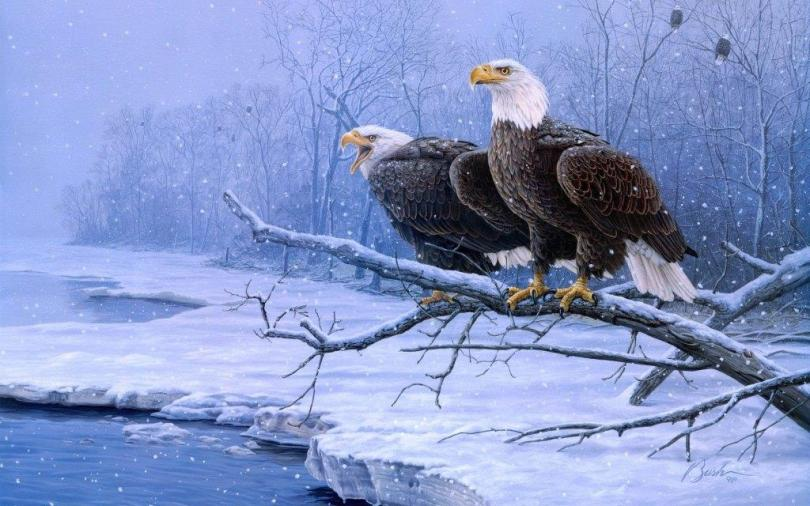2 Eagle Siting On A Tree Looks Stunning