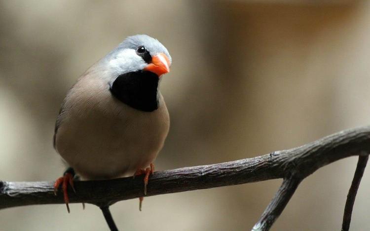 Colorful Beautiful Bird Looks Great