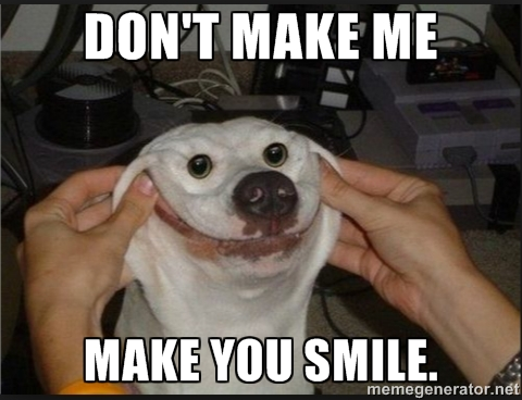 Funny Dog Pictures Guaranteed To Make You Smile