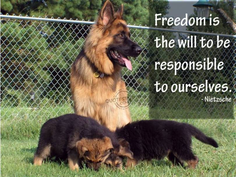 Freedom sayings freedom is the will to be responsible to ourselves
