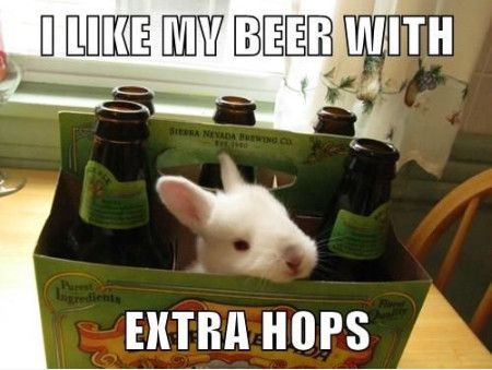 Funny Beer Meme I Like My Beer With Extra Hops