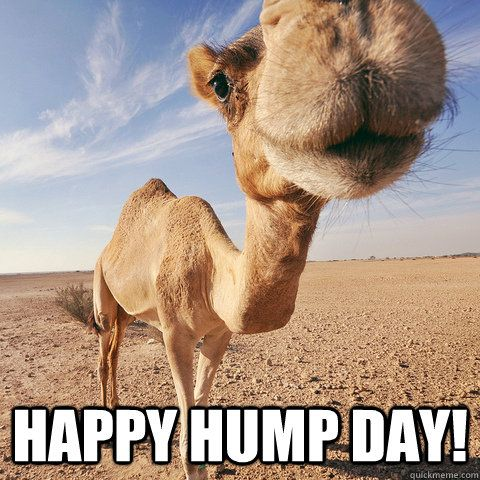 Happy Hump Day Meme Photo