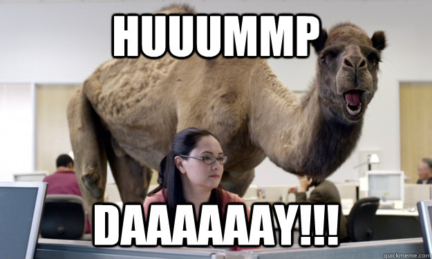 Hump Day Meme Photo