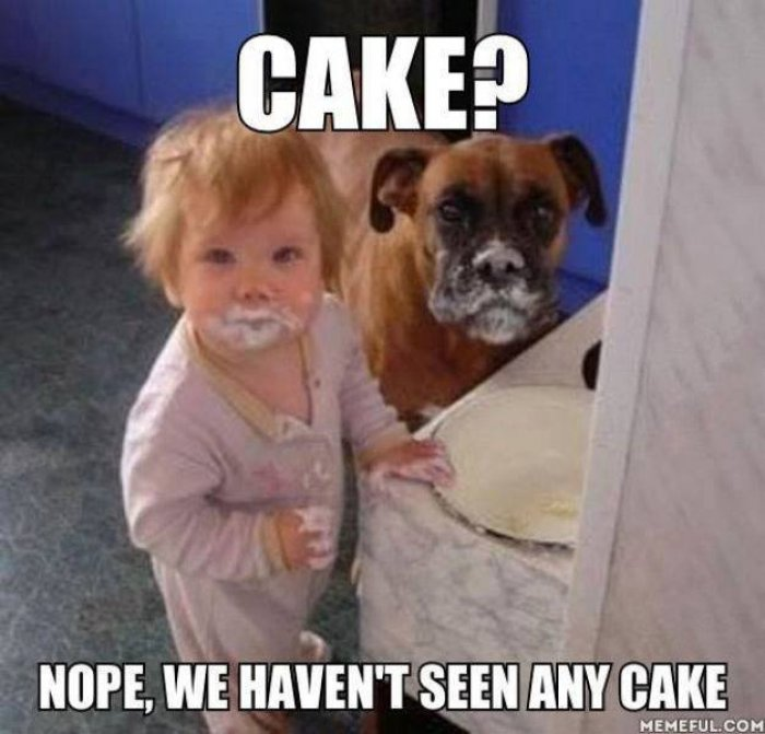 Meme Cake Nape We Havent Seen Any Cake Image