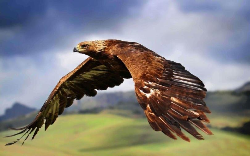 Wonderful Eagle Flying In The Sky