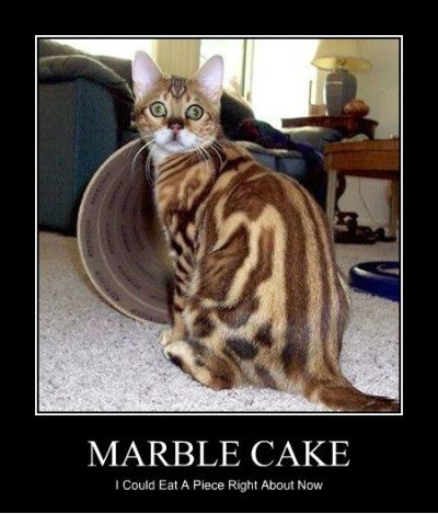 Cake Memes marble cake i could eat a piece right about now