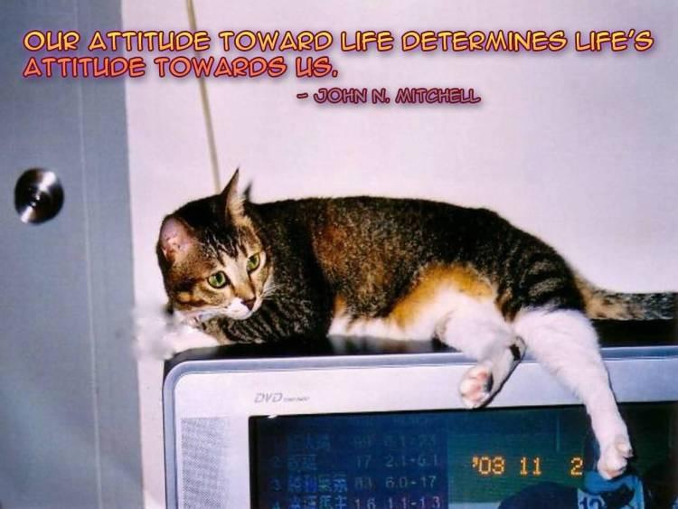 Determination sayings our attitude toward life determines life's