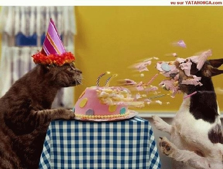 Funny Cake Memes
