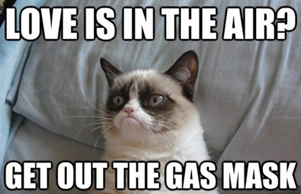 Grumpy Cat Memes Love Is In The Air