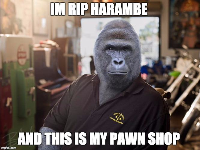 Harambe Memes Im Rip Harambe And This Is My Pawn Shop