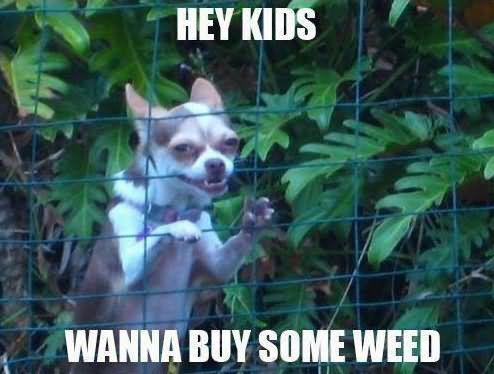 Hey kids wanna buy some weed Sad Meme