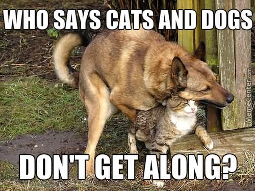 Hug Memes Who says cats and dogs don't get along