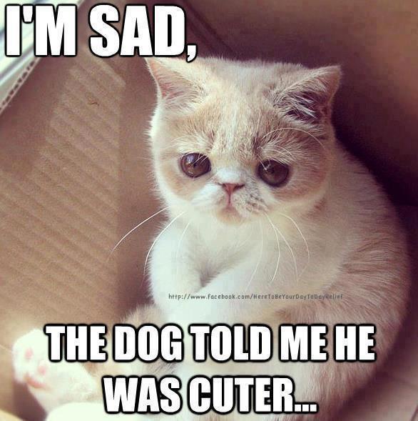 I'm sad the dog told me he was cuter Sad Meme