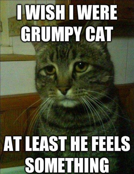 Sad Meme i wish were crumpy cat at least he feels something