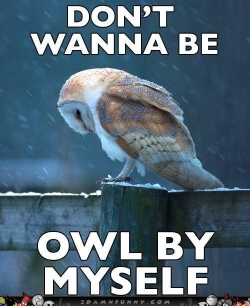 Sad Memes Don't Wanna be owl by myself