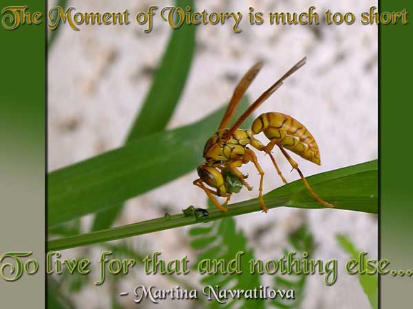Victory Sayings the moment of victory is much too short