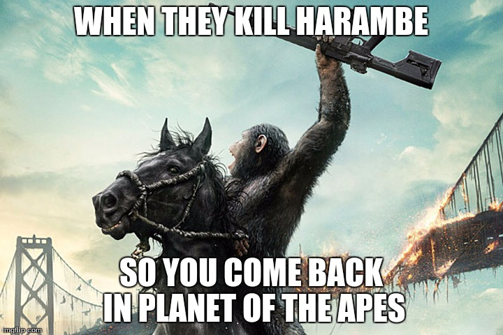 When Thay Kill Harambe So You Come Back In Planet Of The Apes Harambe Memes
