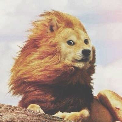 doge meme in lion