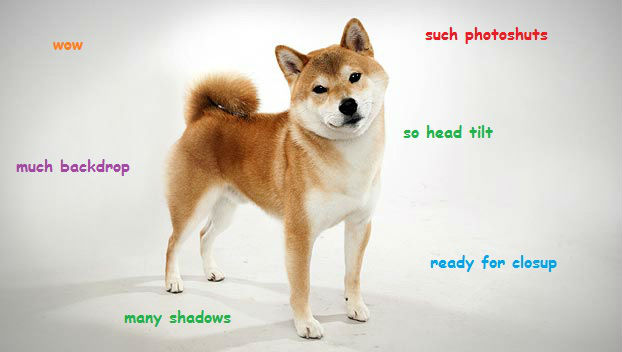 wow such photo shuts much backdrop so head tilt doge meme