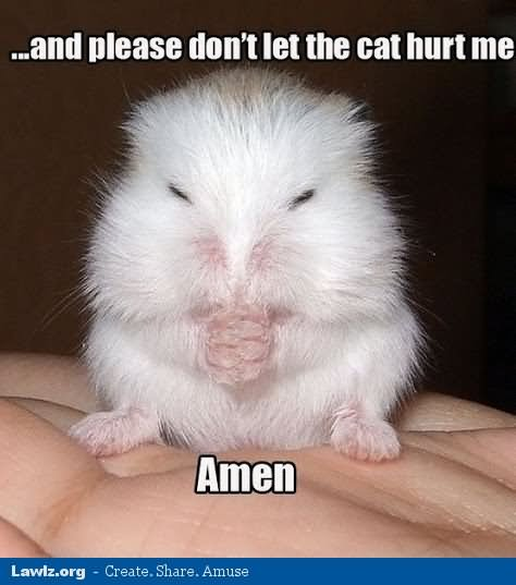 And please don't let the cat hurt me amen Hamster Memes